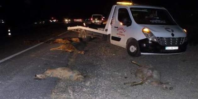 Koyunlara çarpmamak için kaza yaptı:1 kişi öldü,2 kişi yaralandı